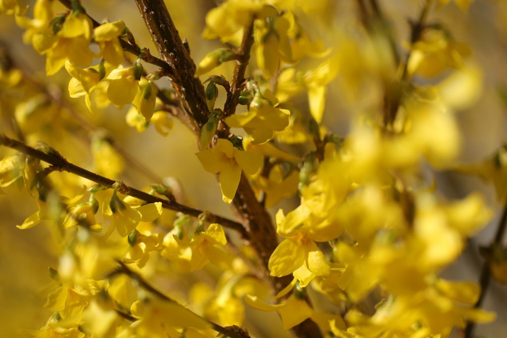 forsythia-blog-episode-4